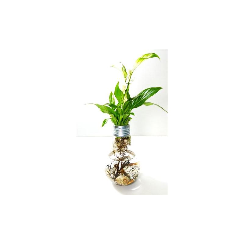 Vase Ampoule Aquaplante medium