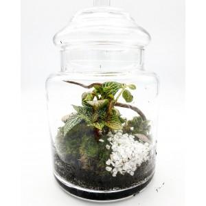 Mini Serre en verre