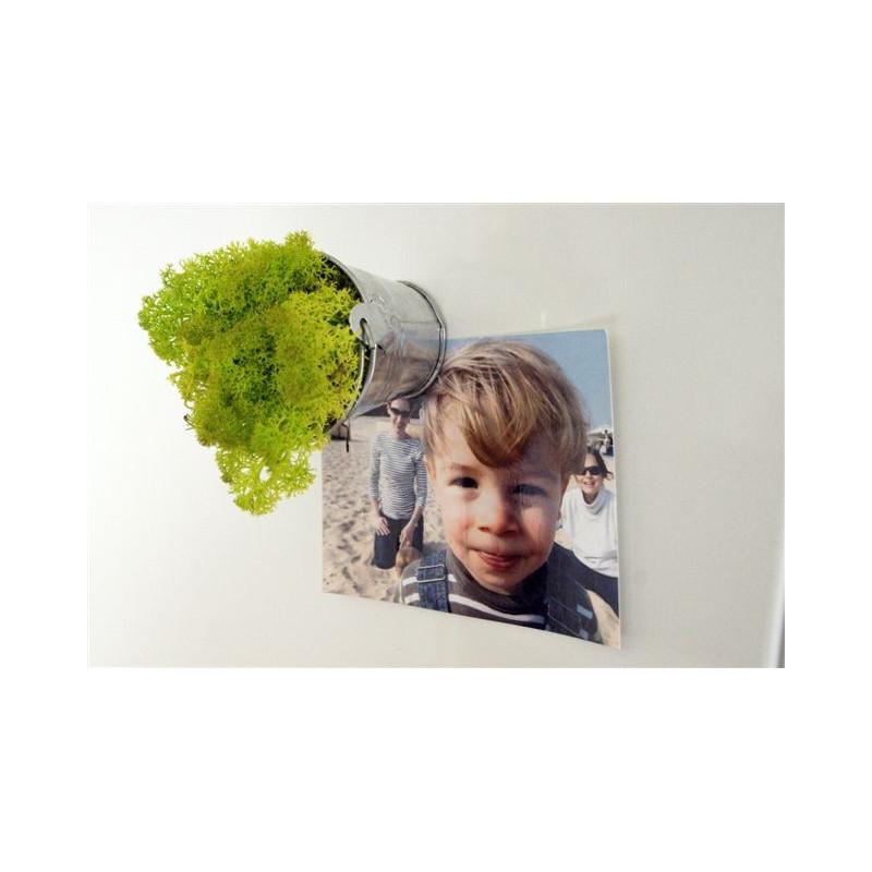 Vérine Végétale Stabilisée Aimantée Lichen Scandinave vert