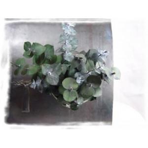 Vérine végétall aimantée eucalyptus