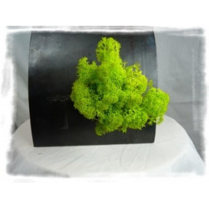verrine végétale aimantée lichen scandinave
