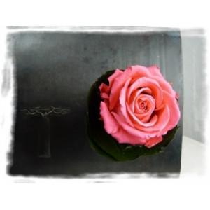 Verrine végétale aimantée rose flash