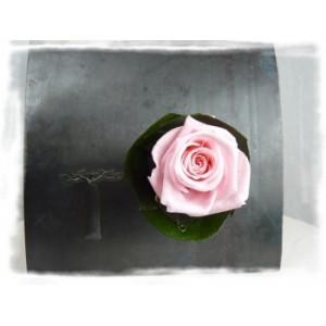 verrine végétale aimantée rose rose