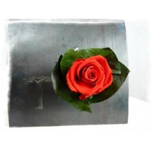 verrine végétale aimantée rose rouge