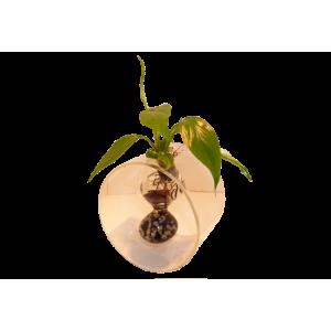 Vase Aquaplante Cylindre
