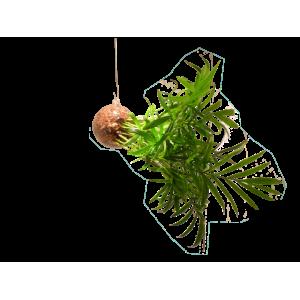 Suspension Végétale M Chamaedorea