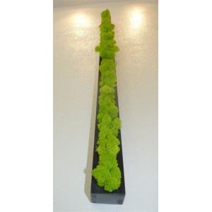 Barre Végétale Lichen Citron