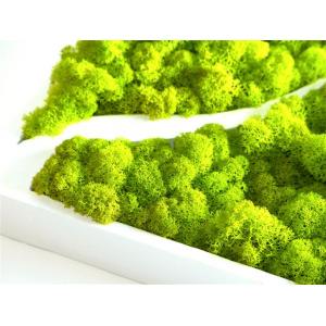 Logo Végétal