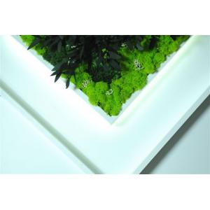 Tableau Végétal Led