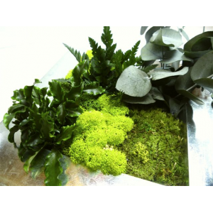 Tableau Végétal Stabilisé Aimanté Gaby Medium