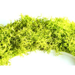 ABCEDAIRE Végétal