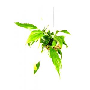 Suspension Végétale M Spatiphyllum