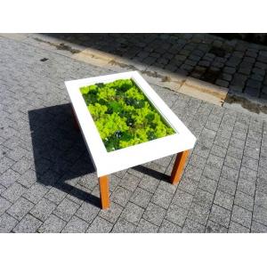 Table Basse Végétale Forest Mixte