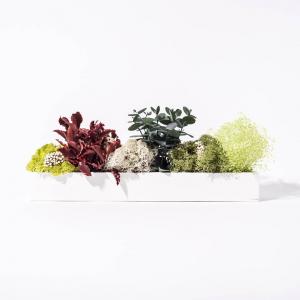 Barre Végétale Stabilisée 30 cm Mixte verte & rouge