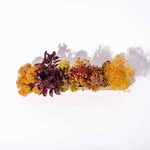 Barre Végétale Stabilisée 30 cm Mixte Orange